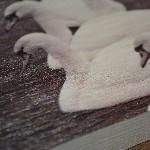 Geschaafd Vurenhout Detail 1