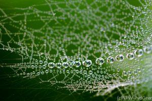 netwerkweb, spin, naturfotografie, natuur