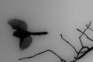 vogel, pimpelmees, natuur, fotografie