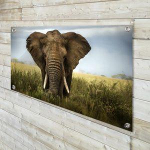 tuinposter, olifant, tuinposter op maat, vergelijk canvas